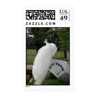 Albino Peacock Stamp