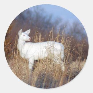 albino etiqueta redonda