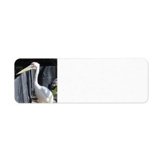 Albino Pelican Return Address Label
