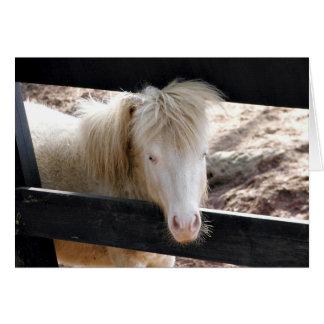 Albino Pony Card