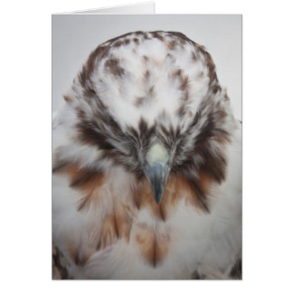 Albino Red-tailed Hawk Stationery Note Card