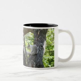 Albino Squirrel Mug Mugs