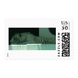Albino Tiger Postage