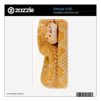 Albino Western diamondback rattlesnake (Crotalus A Decal For The iPhone 4