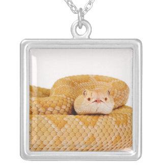 Albino Western diamondback rattlesnake (Crotalus A Jewelry