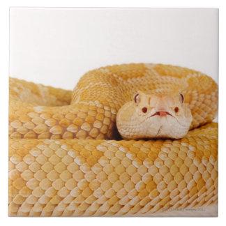 Albino Western diamondback rattlesnake (Crotalus A Ceramic Tiles