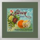 Albion Oranges Fruit Crate Label Poster