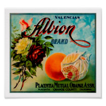Albion Oranges Produce Crate Label - Poster