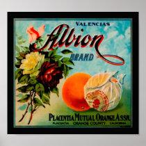 Albion Oranges Produce Crate Label - Poster 2