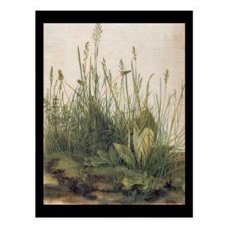 Albrecht Durer Great Piece of Turf Postcard