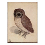 Albrecht Durer Little Owl Print