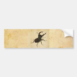 Albrecht Durer Stag Beetle Renaissance Vintage Art Bumper Sticker