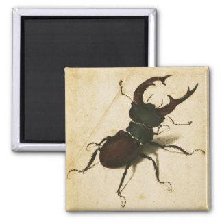 Albrecht Durer Stag Beetle Renaissance Vintage Art Magnet