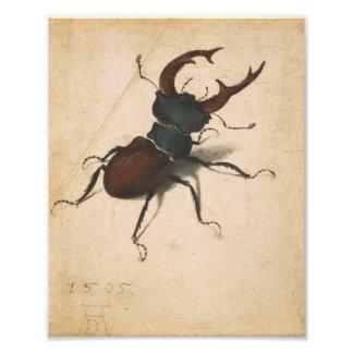 Albrecht Durer Stag Beetle Renaissance Vintage Art Photo Art