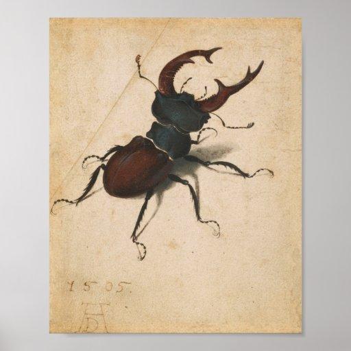 Albrecht Durer Stag Beetle Renaissance Vintage Art Posters