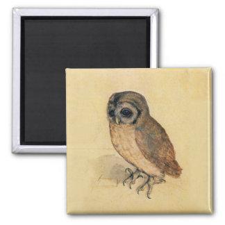 Albrecht Durer The Little Owl 2 Inch Square Magnet