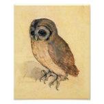 Albrecht Durer The Little Owl Photo Print