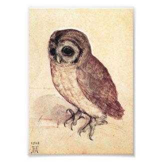 Albrecht Durer The Little Owl Print