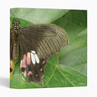 """Álbum de foto de la mariposa de Swallowtail del Carpeta 1"""""""