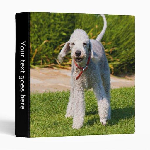 """Álbum de foto del perro de Bedlington Terrier, Carpeta 1"""""""