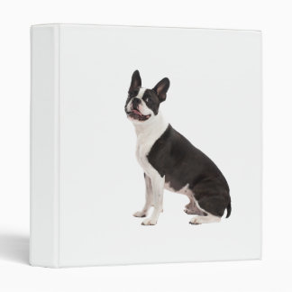 "Álbum de foto hermoso del perro de Boston Terrier, Carpeta 1"""