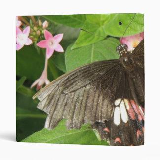 """Álbum de foto macro de la mariposa de Swallowtail Carpeta 1"""""""