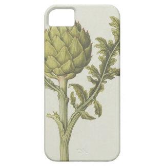 Alcachofa: Scolymus del Cynara, c.1568 iPhone 5 Carcasas