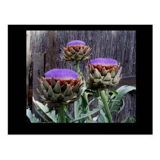 Alcachofas florecientes tarjetas postales