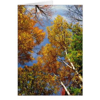 Alcanzando al cielo, los árboles altos, esconden tarjeta pequeña