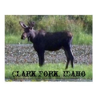 """~ """"alce en la bifurcación de Clark del prado"""" -, Postales"""
