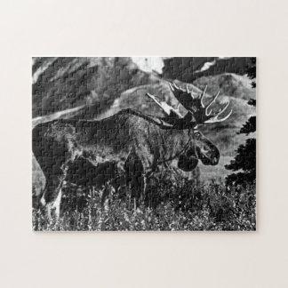Alces 1970 del toro de los E.E.U.U. Alaska Puzzles