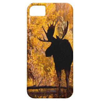 Alces (Alces) del Alces Bull en los sauces de oro Funda Para iPhone SE/5/5s