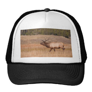 Alces bugling gorros
