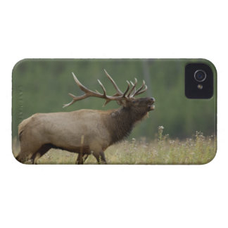 Alces bugling, Yellowstone NP, Wyoming de Bull iPhone 4 Case-Mate Protector