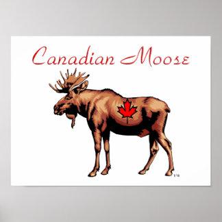 Alces canadienses póster