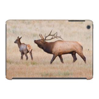 Alces (Cervus Elephus) Bull que reúne el Harem 2 Funda De iPad Mini