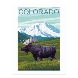Alces con MountainColorado Postales