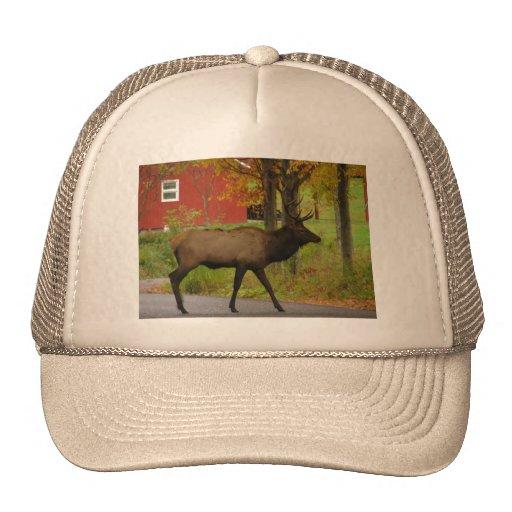 Alces conseguidos gorra