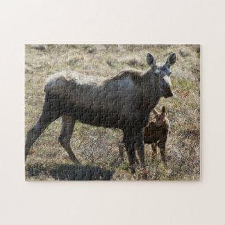 Alces de Alaska de la vaca con el becerro Rompecabezas Con Fotos