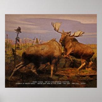 alces de Alaska Poster