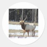 Alces de Banff Etiqueta Redonda