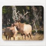Alces de Bull Alfombrilla De Raton