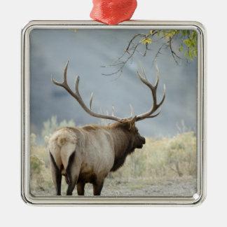 Alces de Bull, canadensis del Cervus, en Ornamento Para Reyes Magos