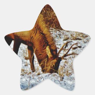 Alces de Bull en nieve Pegatina En Forma De Estrella