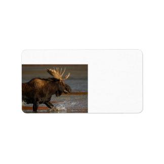 Alces de Bull Etiqueta De Dirección