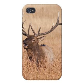 Alces de Bull iPhone 4 Protectores