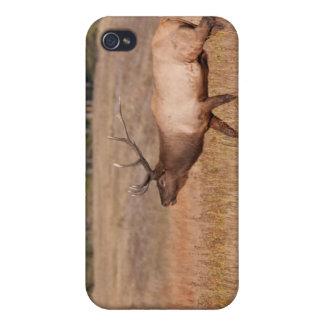 Alces de Bull iPhone 4 Carcasas
