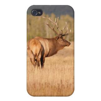 Alces de Bull iPhone 4 Cobertura