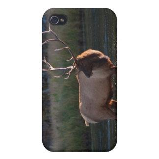 Alces de Bull iPhone 4 Fundas