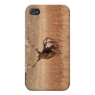 Alces de Bull iPhone 4/4S Carcasa